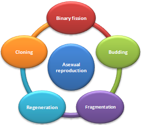 Regeneration asexual reproduction definition biology