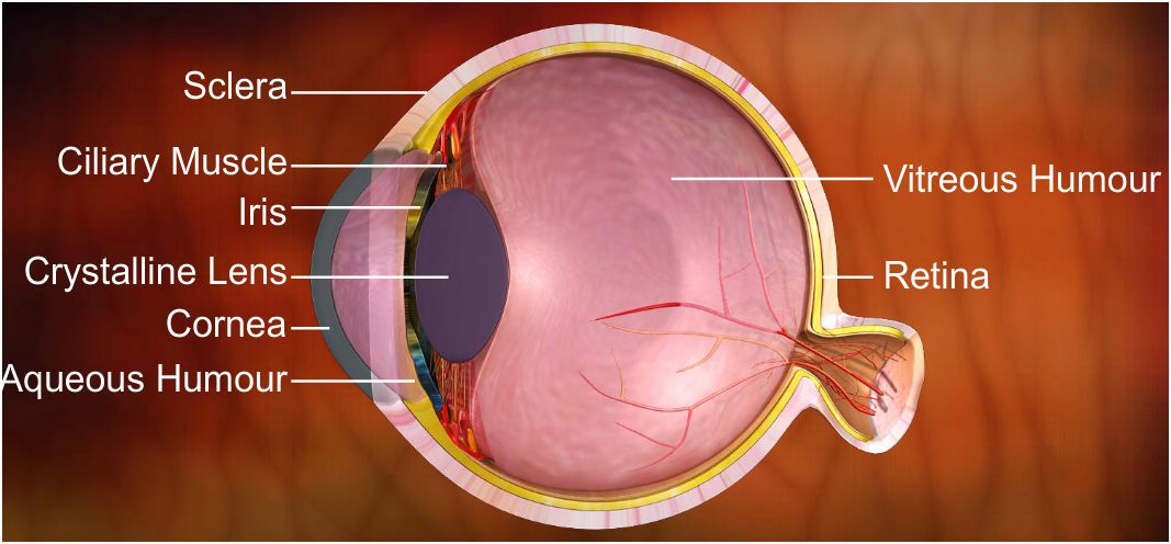 Icse class 8 physics light and eyes lessson summary notes qa accommodation of eye ccuart Choice Image